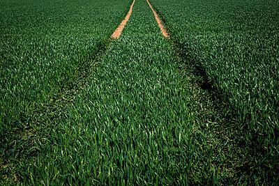 Traces in a cornfield - p743m1190595 by Stefan Freund
