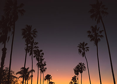 Palm Trees at Sunset - p1503m2020410 by Deb Schwedhelm