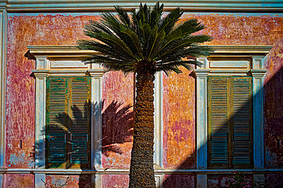 Italy, Apulia, Palm tree in front of abandoned house - p300m980102 by Dirk Kittelberger