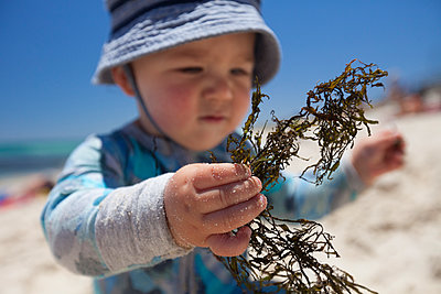 Baby boy playing with seaweed at beach, Perth, Western Australia, Australia - p343m1526472 by Christopher Kimmel