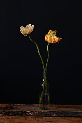 Verwelkte Blumen in einer Vase - p1190m2289004 von Sarah Eick