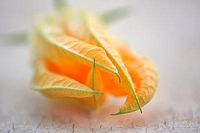 Squash blossom - p577m1528549 by Mihaela Ninic