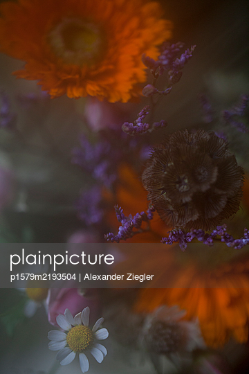 Different flowers in diffused light - p1579m2193504 by Alexander Ziegler