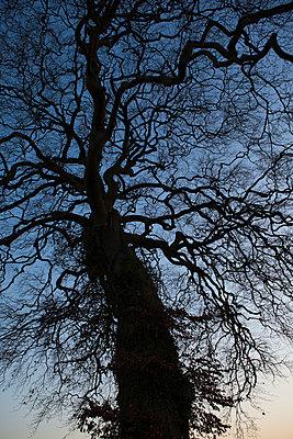 Großer Baum - p1057m1010265 von Stephen Shepherd
