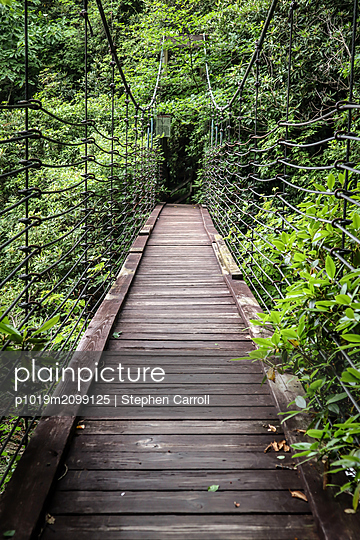 Suspension bridge in the forest - p1019m2099125 by Stephen Carroll