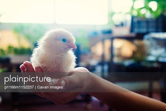 p1166m1152237 von Cavan Images
