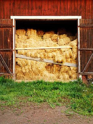 Hay bales in barn - p972m1136634 by Felix Odell