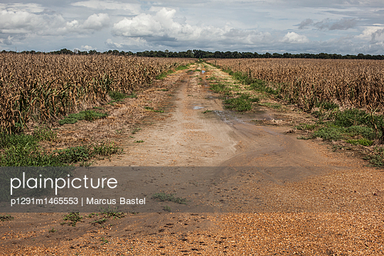 Corn field - p1291m1465553 by Marcus Bastel