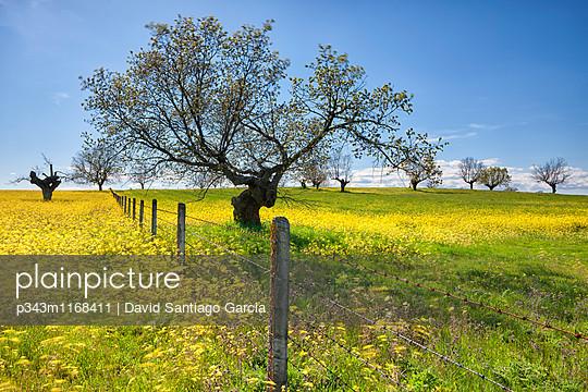 p343m1168411 von David Santiago Garcia