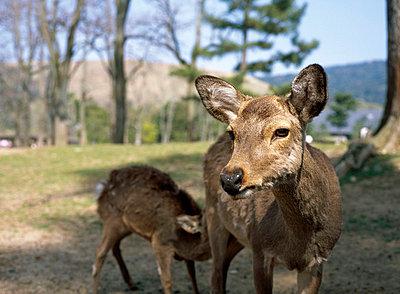 Bambi - p2680459 von Christof Mattes
