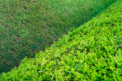Hedge and lawn - p427m1515713 by Ralf Mohr