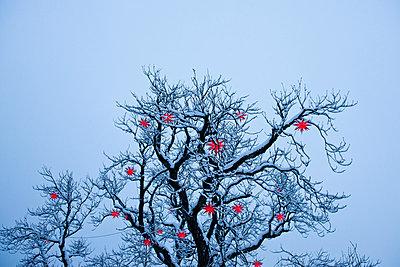 Rot leuchtende Sternlampions - p533m1474808 von Böhm Monika