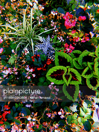 Flower bed - p1189m2263804 by Adnan Arnaout