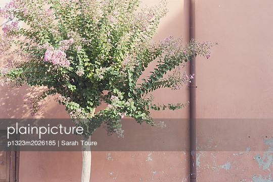 Flowering tree - p1323m2026185 von Sarah Toure