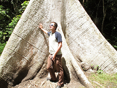 Man standing under a Ceiba - p5080185 by Olivia Barr