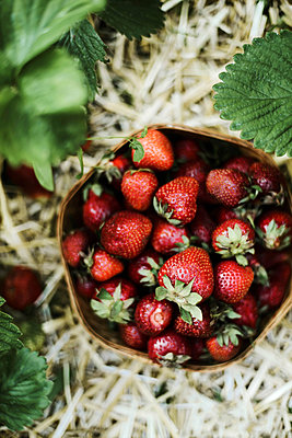 Close-up of strawberry growing on plant - p1166m2094498 by Cavan Images