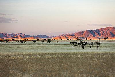 Namib Desert, Namibia, Africa - p871m1082241 by Neil Emmerson