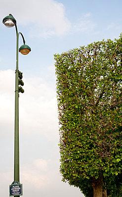 Topiary - p940m813599 by Bénédite Topuz
