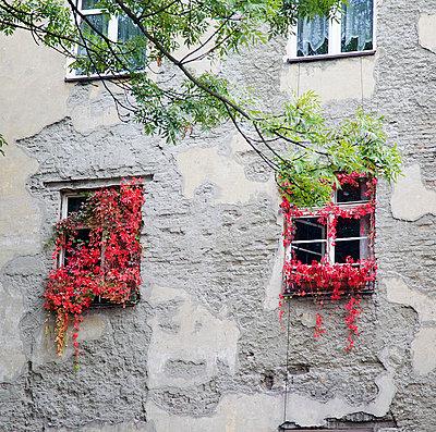 Overgrown - p606m741166 by Iris Friedrich