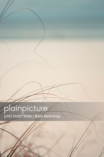 USA, Florida, Navarre, Grasses on the beach - p1617m2278906 by Barb McKinney