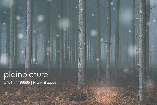 Winterwald - p401m1198585 von Frank Baquet