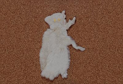 Katzenfell und leuchtende Augen - p1279m1222282 von Ulrike Piringer