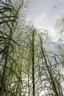 Plants - p229m2021772 by Martin Langer