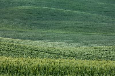 Gewelltes Land - p7980156 von Florian Loebermann