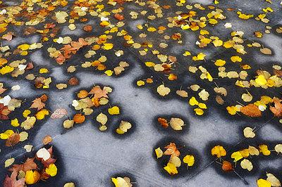 Herbstlaub - p8290121 von Régis Domergue