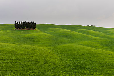 Cypress trees near San Quirico d'Orcia, Val d'Orcia, Siena province, Tuscany, Italy - p924m1480529 by Delta Images
