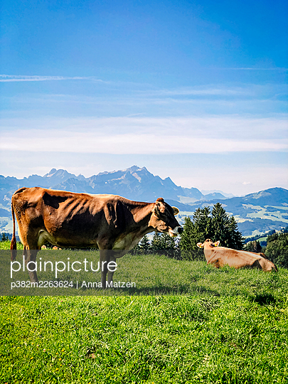 Two cows on the mountain pasture - p382m2263624 by Anna Matzen