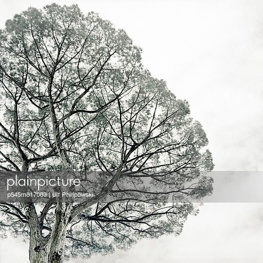 Blasser Baum - p545m817083 von Ulf Philipowski