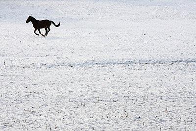 Spaß im Schnee - p1057m852944 von Stephen Shepherd