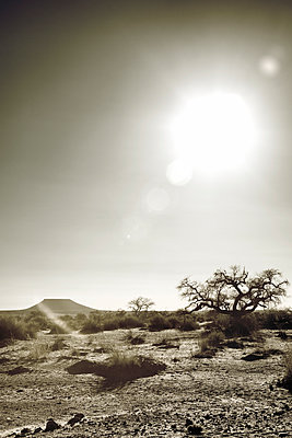 Blazing heat over desert landscape  - p1248m1138267 by miguel sobreira