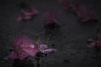 Rainy day - p1544m2122150 by Mirka van Renswoude