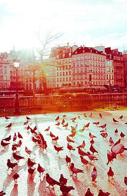 Viele Tauben auf Patz in Paris - p432m1222240 von mia takahara