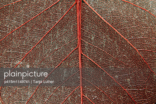 Leaf vein - p415m1149741 by Tanja Luther