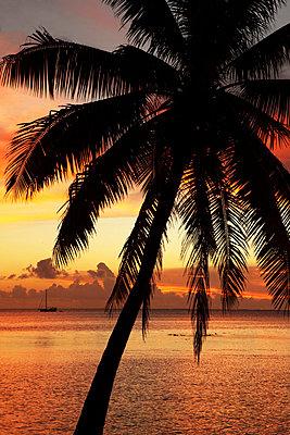 Sonnenuntergang Polynesien - p045m716350 von Jasmin Sander