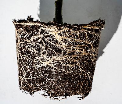 Roots - p1082m2283390 by Daniel Allan