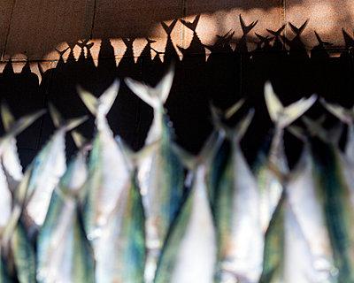 Fische in der Trocknung, Fischmarkt, Dschidda, Saudi-Arabien - p1542m2173314 von Roger Grasas