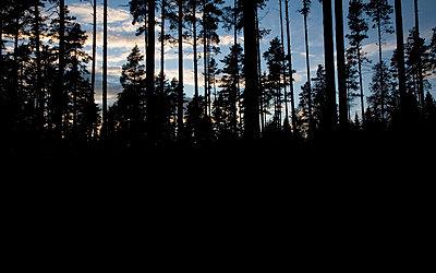 A forest Sweden. - p312m1077356f by Stefan Wettainen