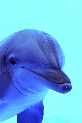 Dolphin - p6010239 by Alain Caste