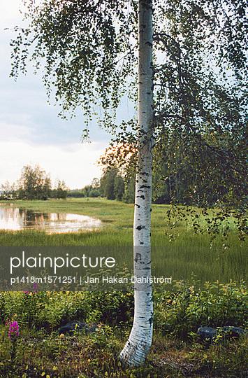 Birke - p1418m1571251 von Jan Håkan Dahlström