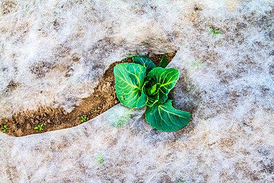 Junges Gemüse - p417m793557 von Pat Meise