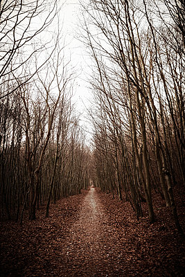 Forest road with autumn colours - p1092m2054251 by Rolf Driesen