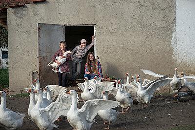 Ferien auf dem Bauernhof - p1437m1502325 von Achim Bunz