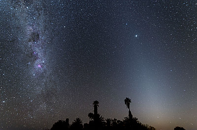 Namibia, Region Khomas, near Uhlenhorst, Astrophoto, Band of Milky Way and parallel Zodiacal Light with palm trees in foreground during twilight - p300m1505859 by Thomas Grohmann