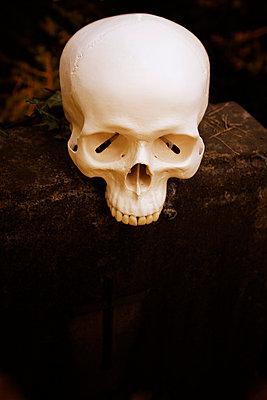 Totenschädel - p3300121 von Harald Braun