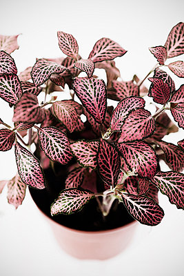 Plant - p1149m995665 by Yvonne Röder