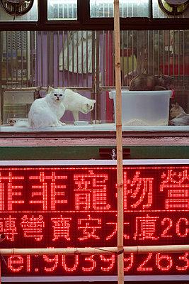Cats in a window - p719m954131 by Rudi Sebastian
